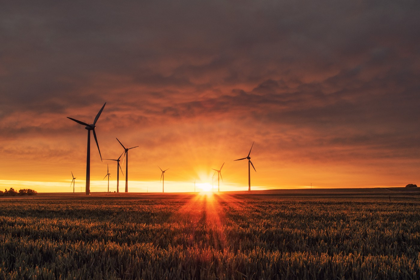 A windfarm in the middle of a field at sunset.