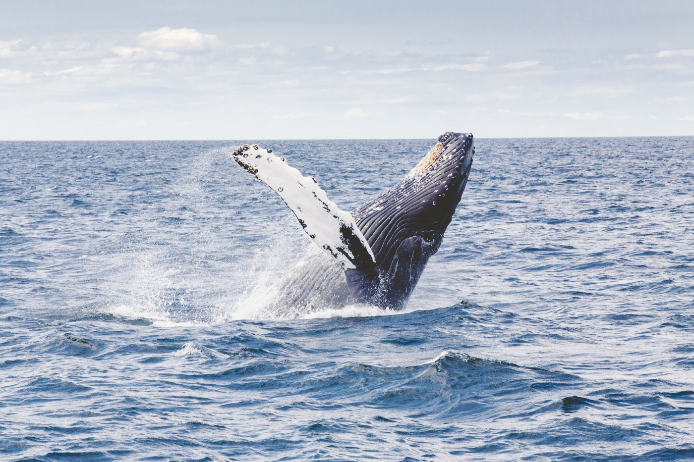 Whales Could Save The Earth From A Climate Disaster
