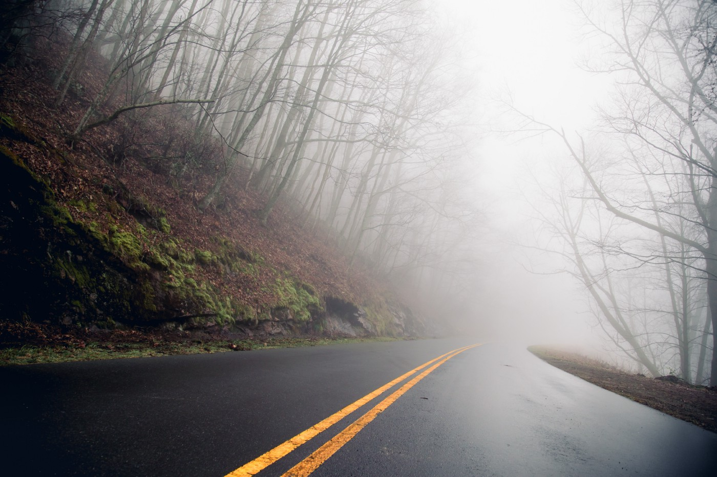 photo of an asphalt road with bare trees on either side disappearing into grey fog.