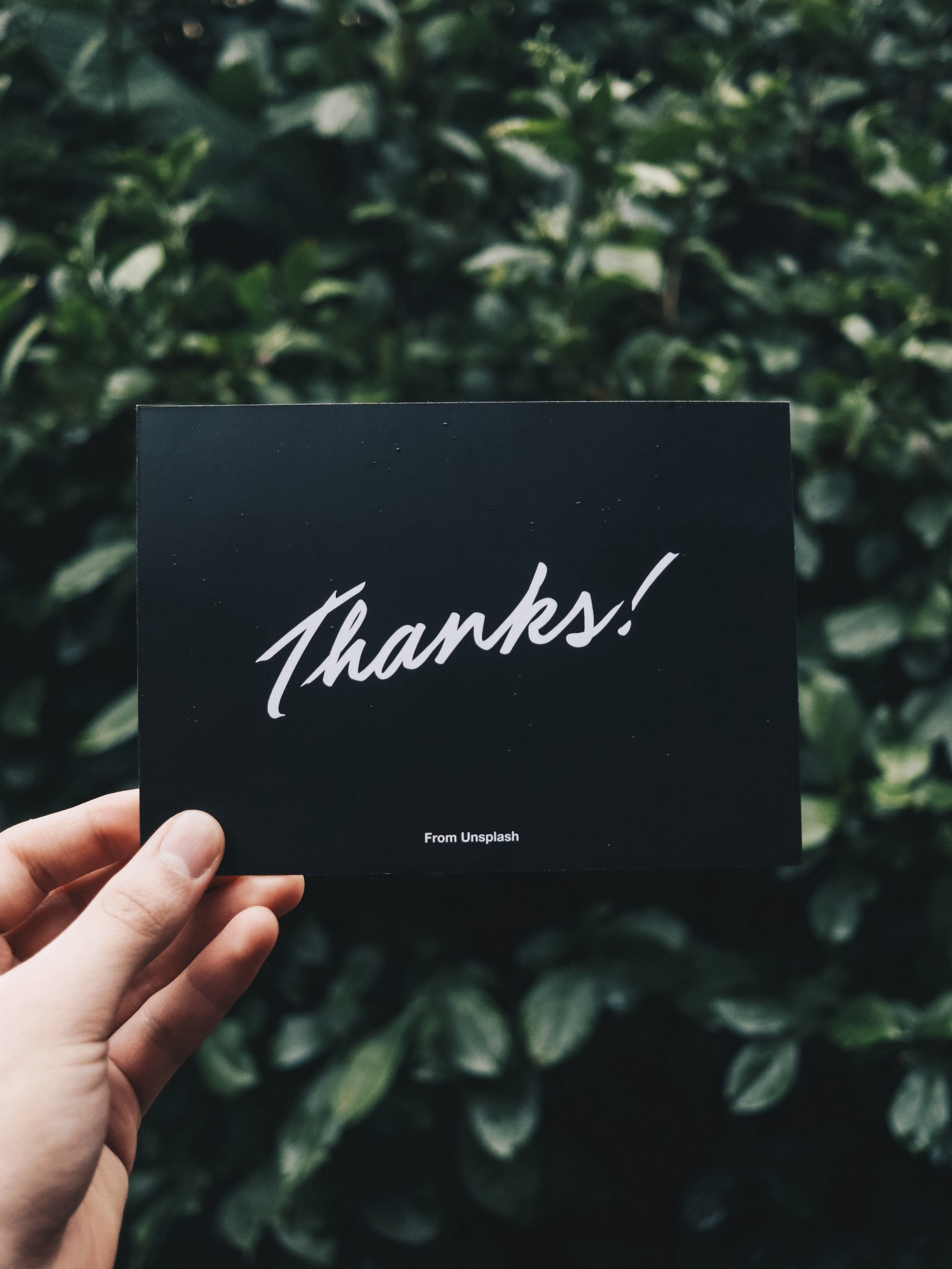 """Left hand holding a black card that says """"Thanks!"""" in a cursive font, and then smaller below says """"From Unsplash."""" Card is held against a green leafy background"""