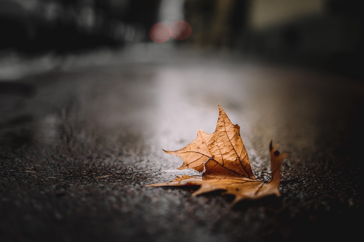 Autumn fallen leaf on a wet ground, symbolizing the onset of the cooler season
