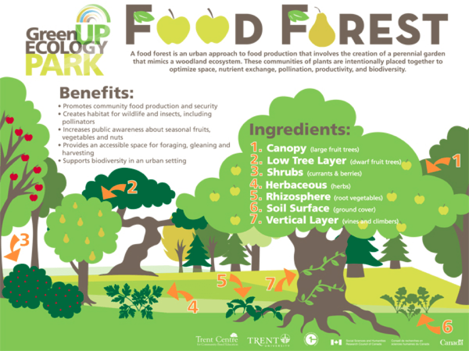 Food Forests 101 An Answer To Food Deserts Poverty And Environmental Destruction By Peter Schulte Age Of Awareness Medium