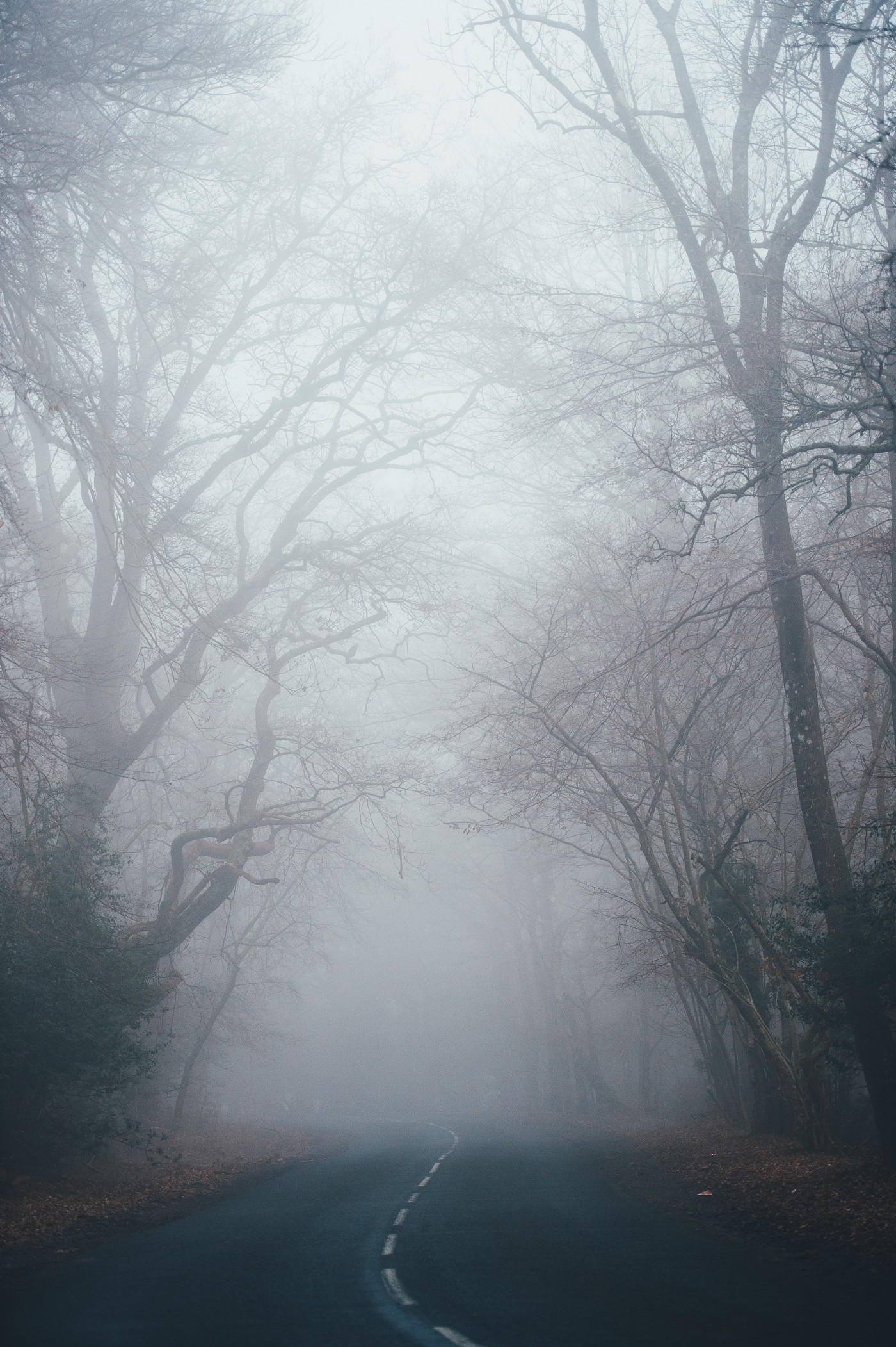 road disappearing into misty woods