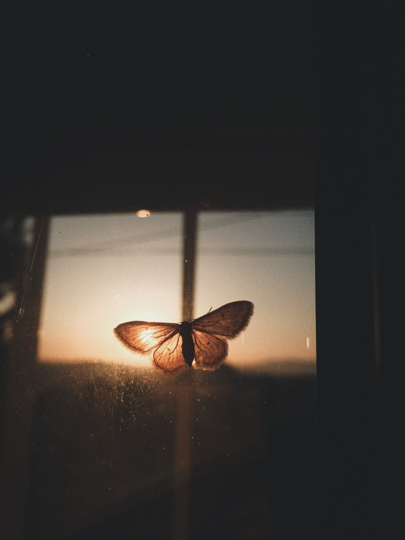 A butterfly got clicked while expanding its wings,
