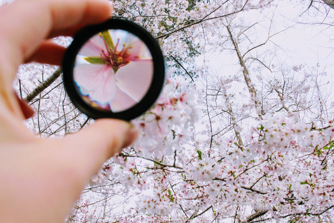 Magnifying lens brings single flower into clear focus amongst many flowers in tree.