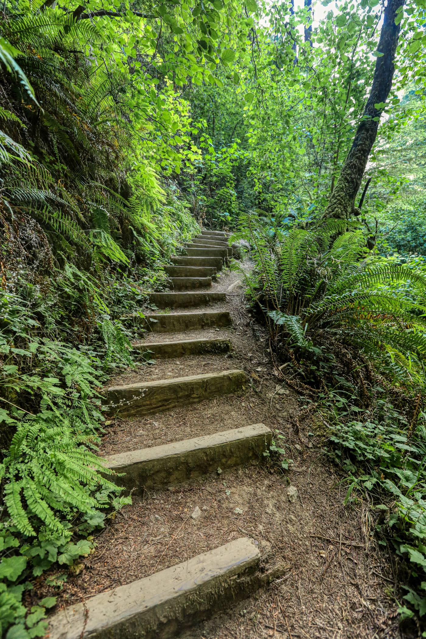 the image is of a winding path, fairly narrow in a forested area. There are logs in place in the form of steps to help the walker to climb and no lose his or her footing.