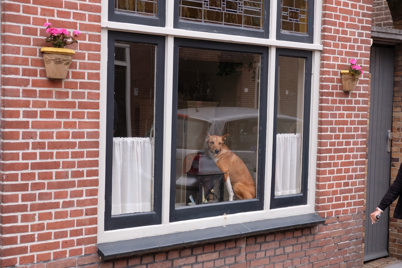 A dog sitting in a large window in a red-brick house, as seen from outside.