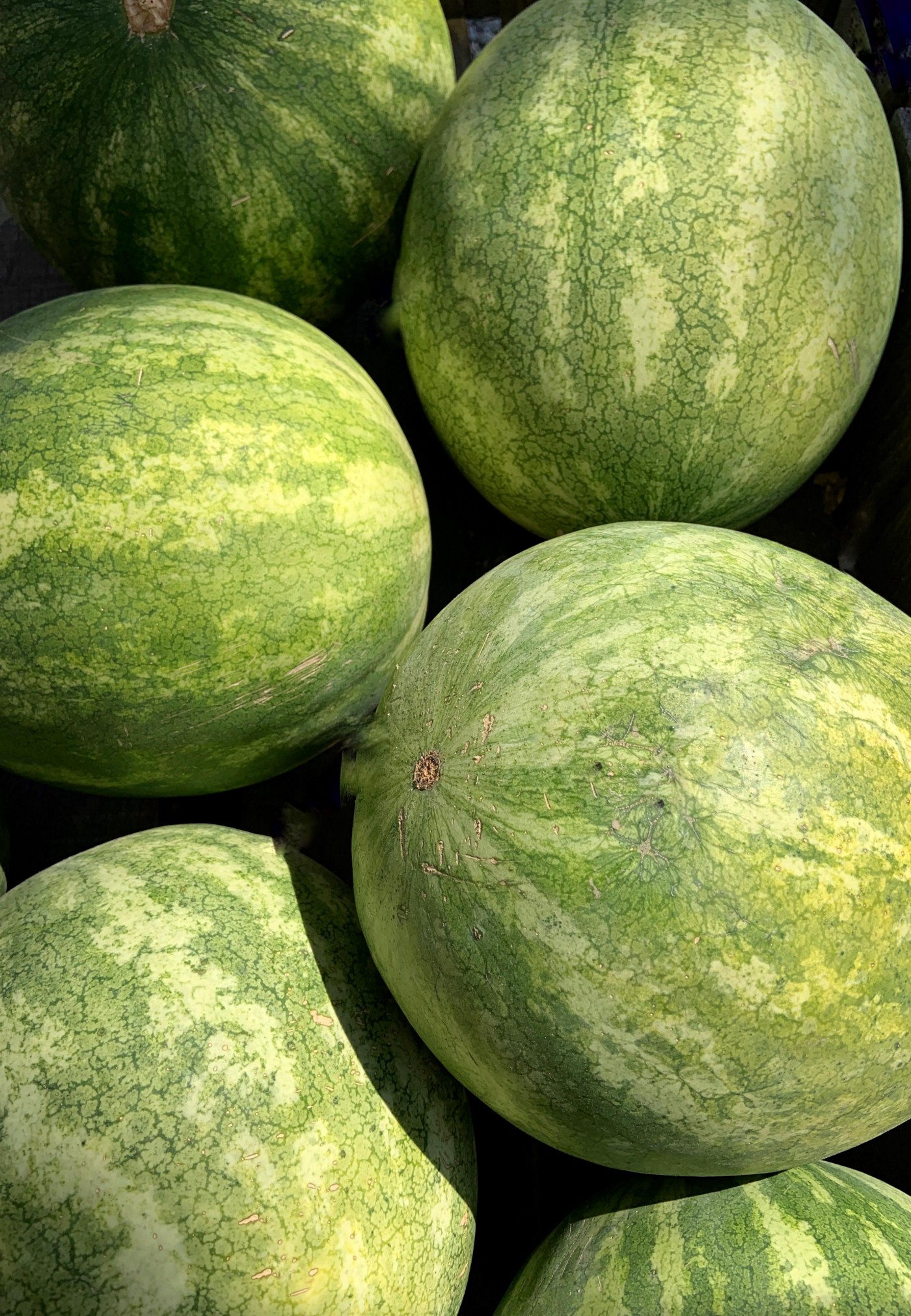Close up of several watermelons