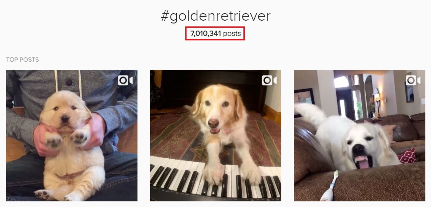 How I Went from 0 to 68,000 Instagram Followers in Less Than 8 Weeks
