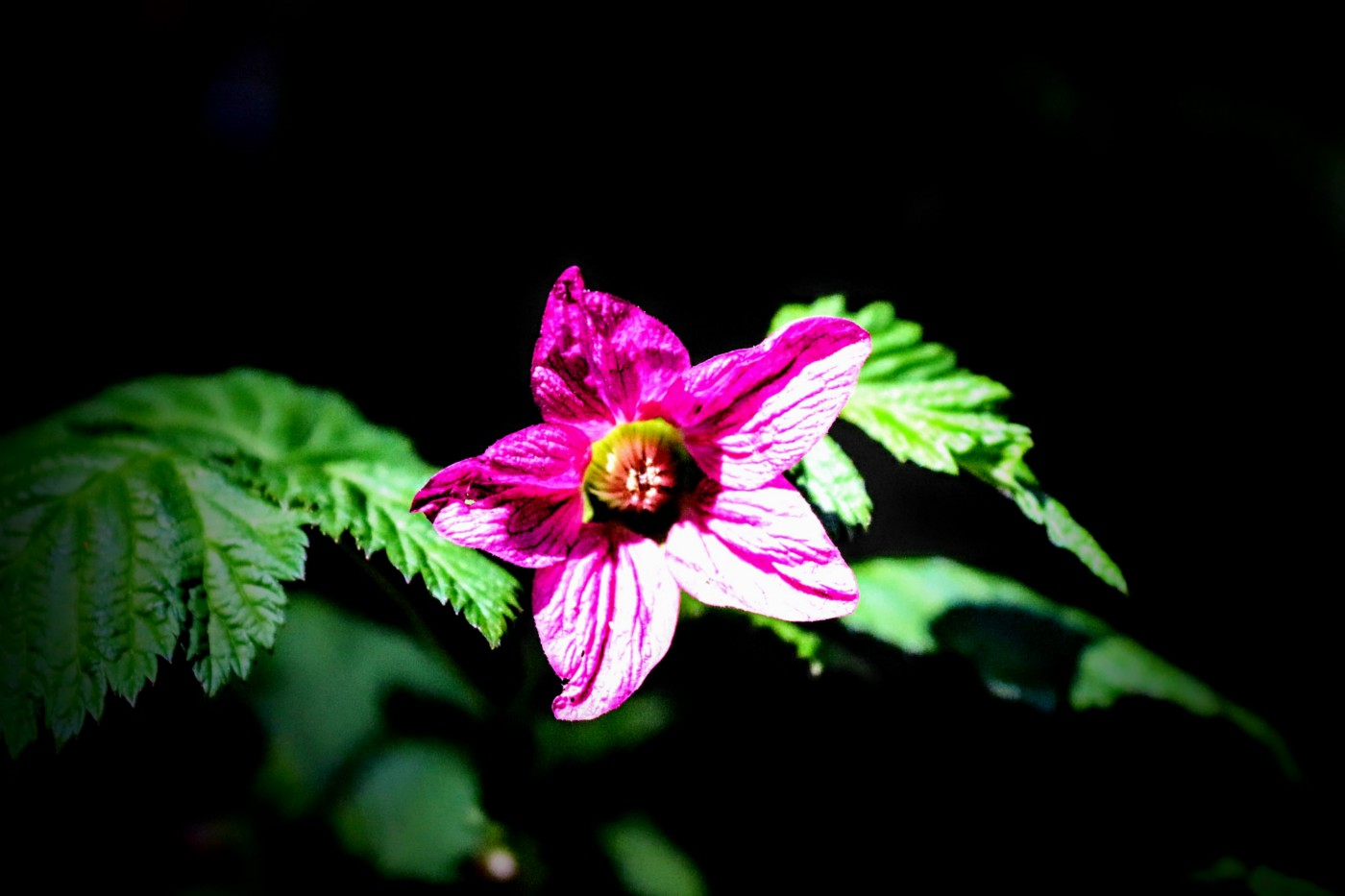 a flower well lit on a black background