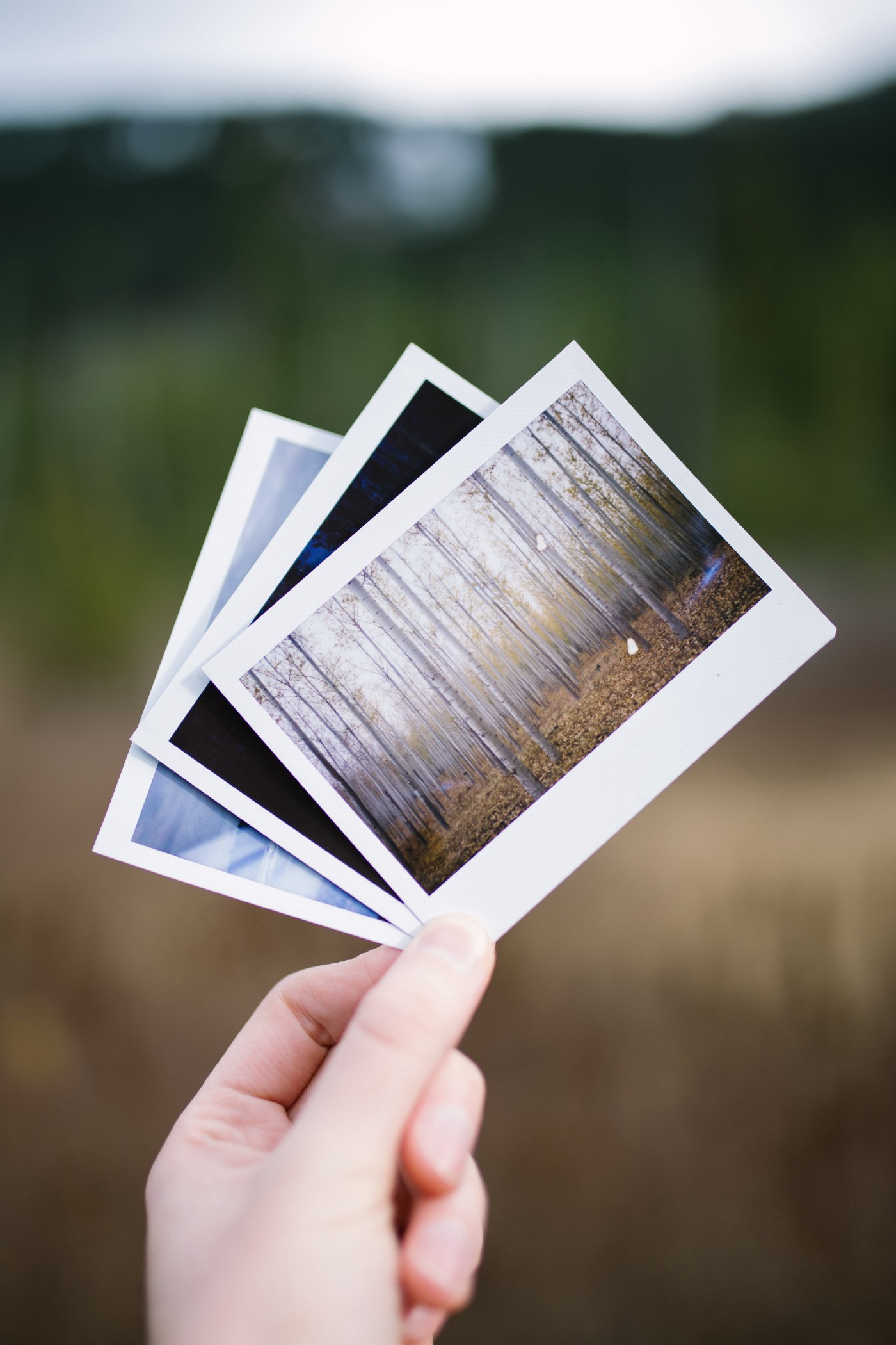 person holding three assorted photographs