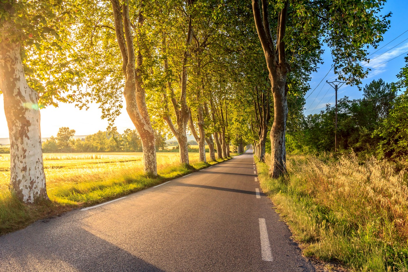 Late summer day with black paved road surrounded by tall trees. Bright blue sky peeks out behind the trees.