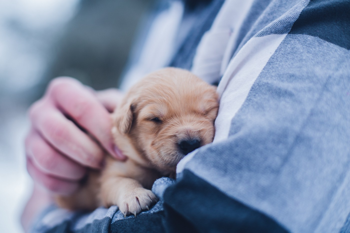 small newborn puppy sleeping in mans arms
