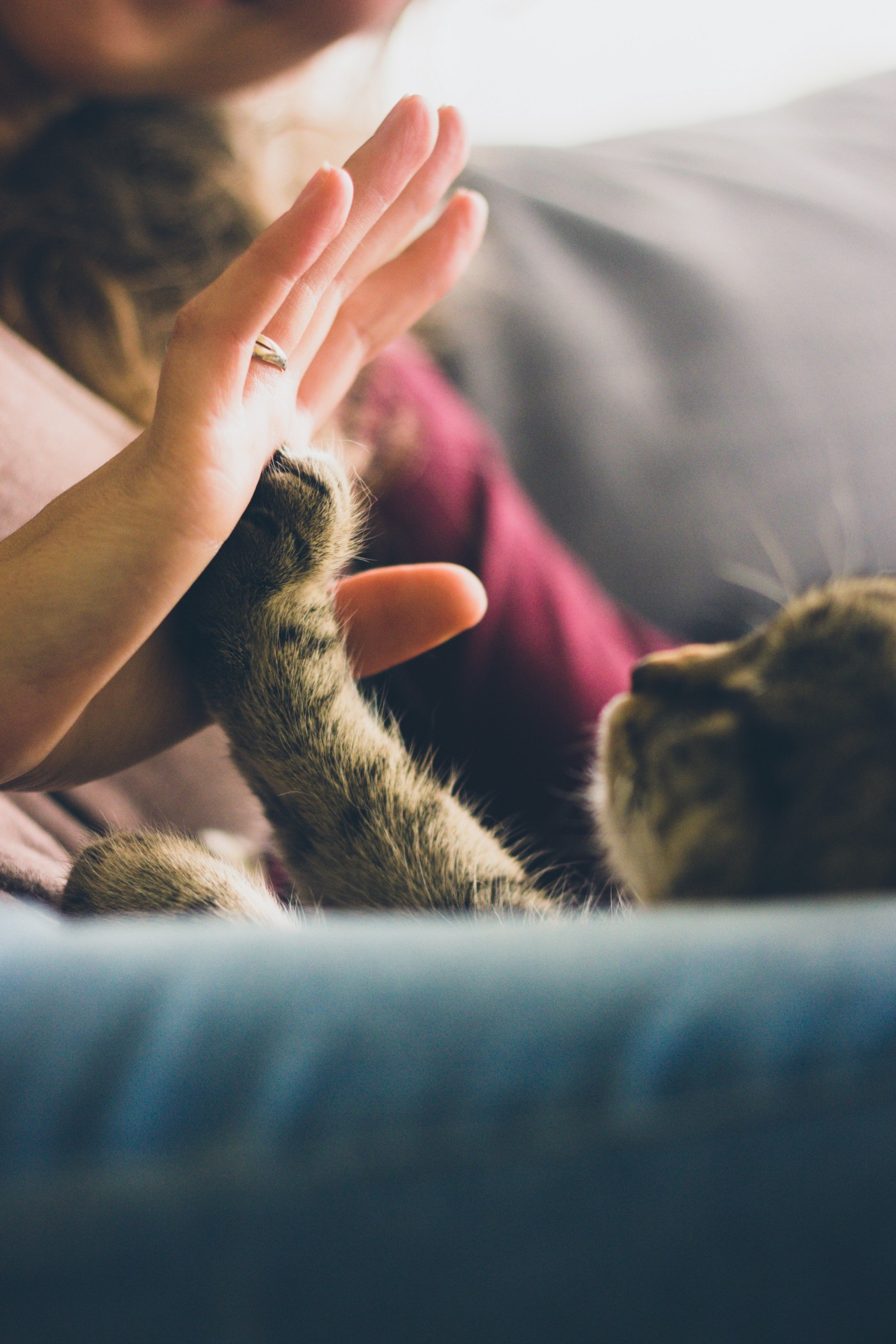 A person touching a cat's paw with their palm, in a gesture of tenderness.