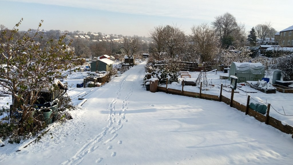 Snow-covered allotments