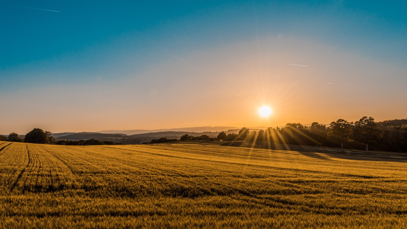 A sunrise over a field