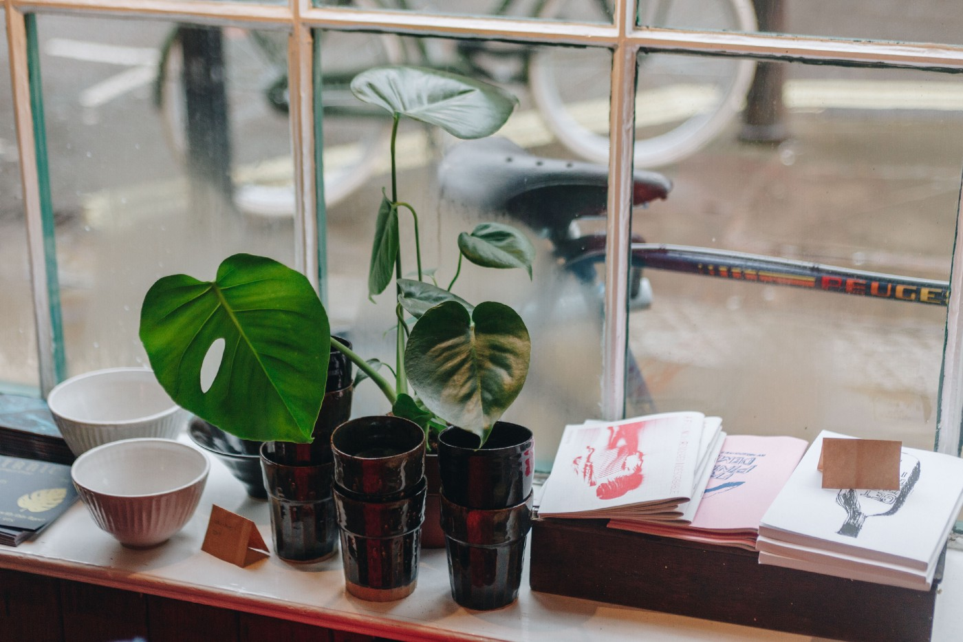 Image of plant growing in a window