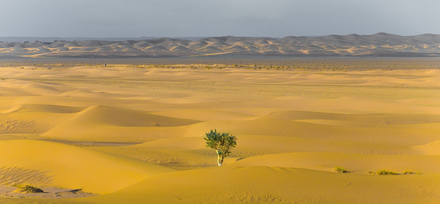 Image of a single tree growing in the beige sands of a desert with rolling foothills off in the distance.