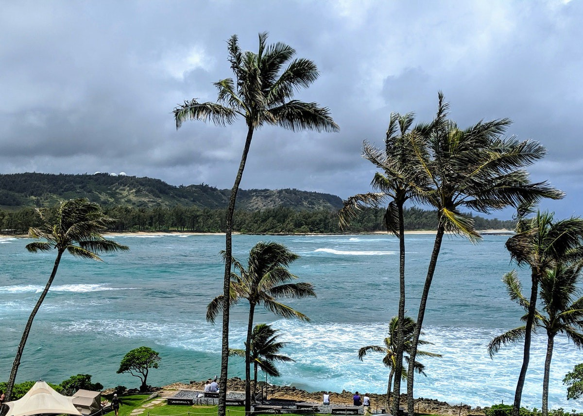 Blue water on the coast of Oahu, Hawaii, and palm trees swaying in the foreground.
