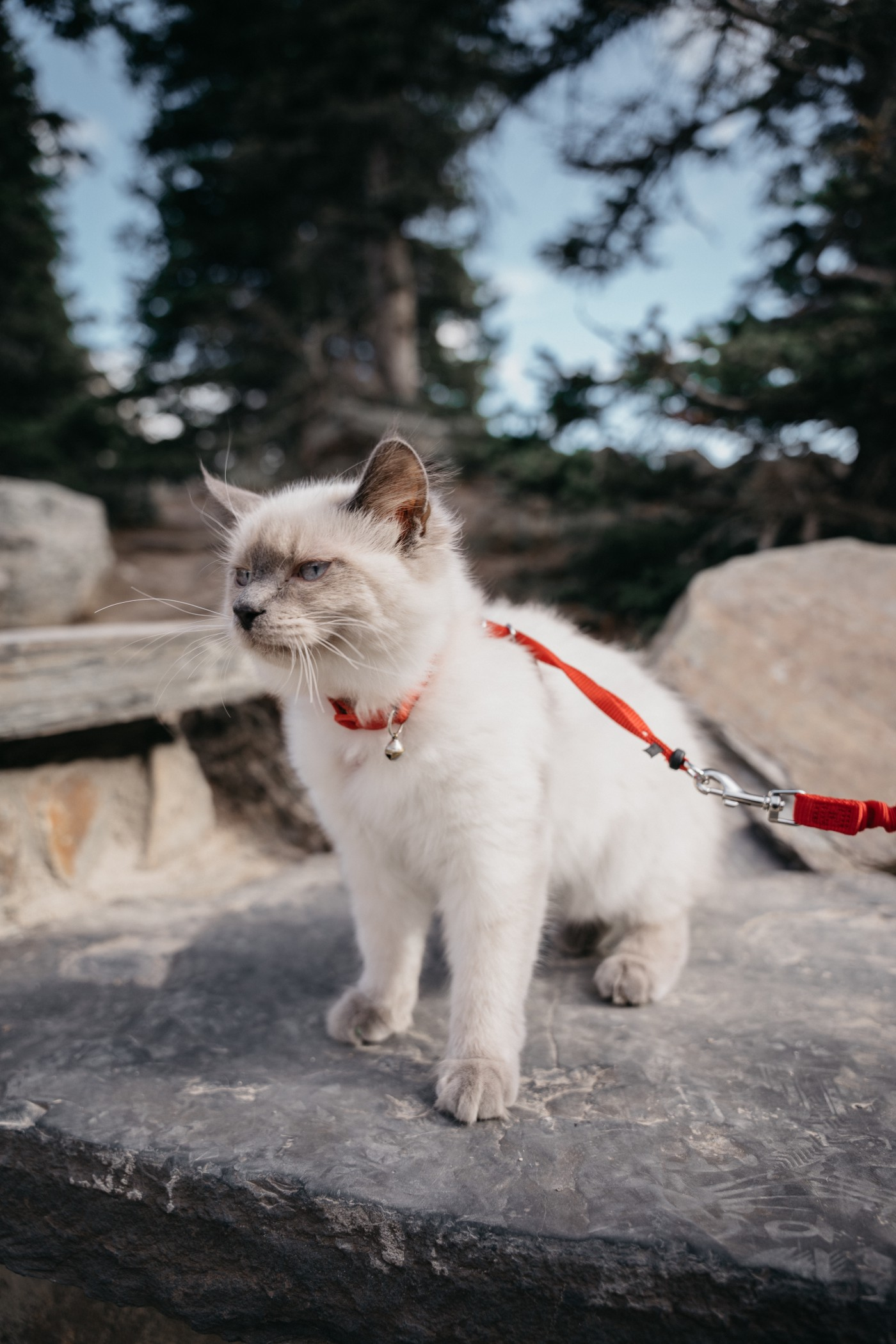 How To Leash Train A Cat?
