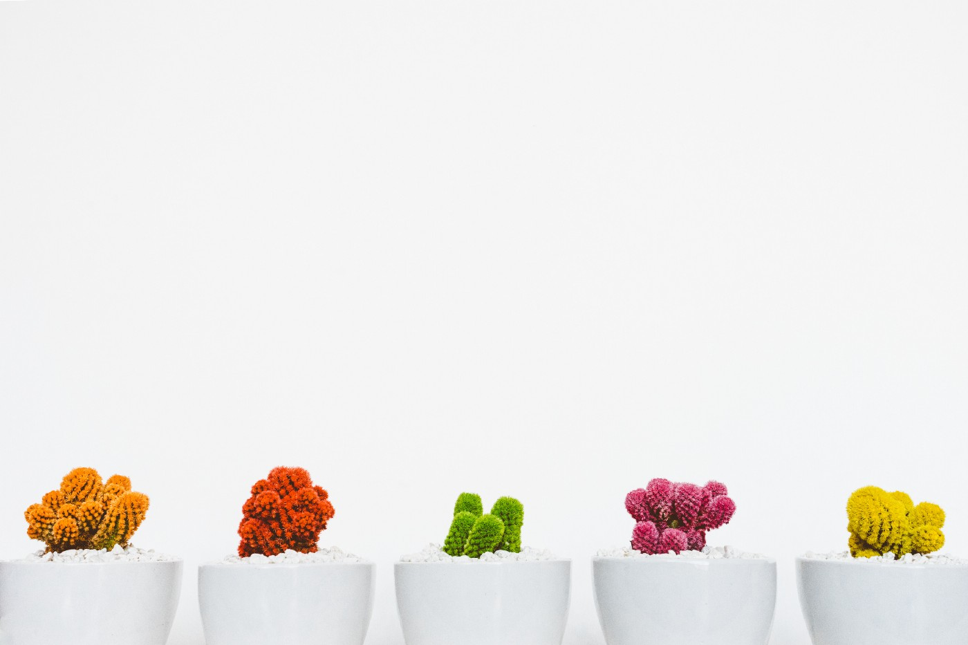 Various colored plants in white pots