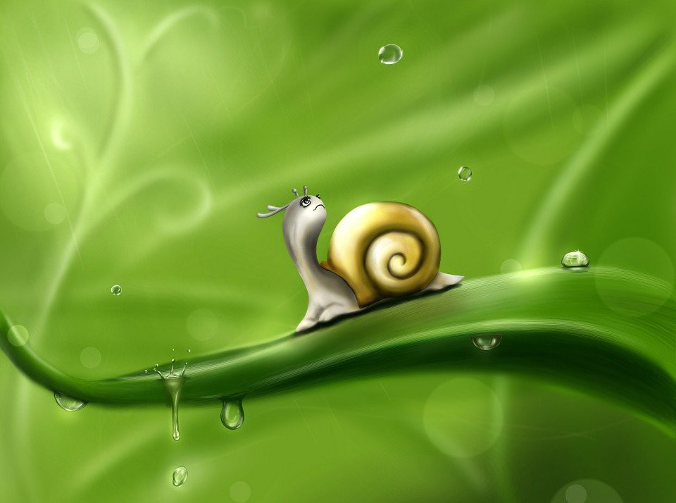 snail contemplating the rain