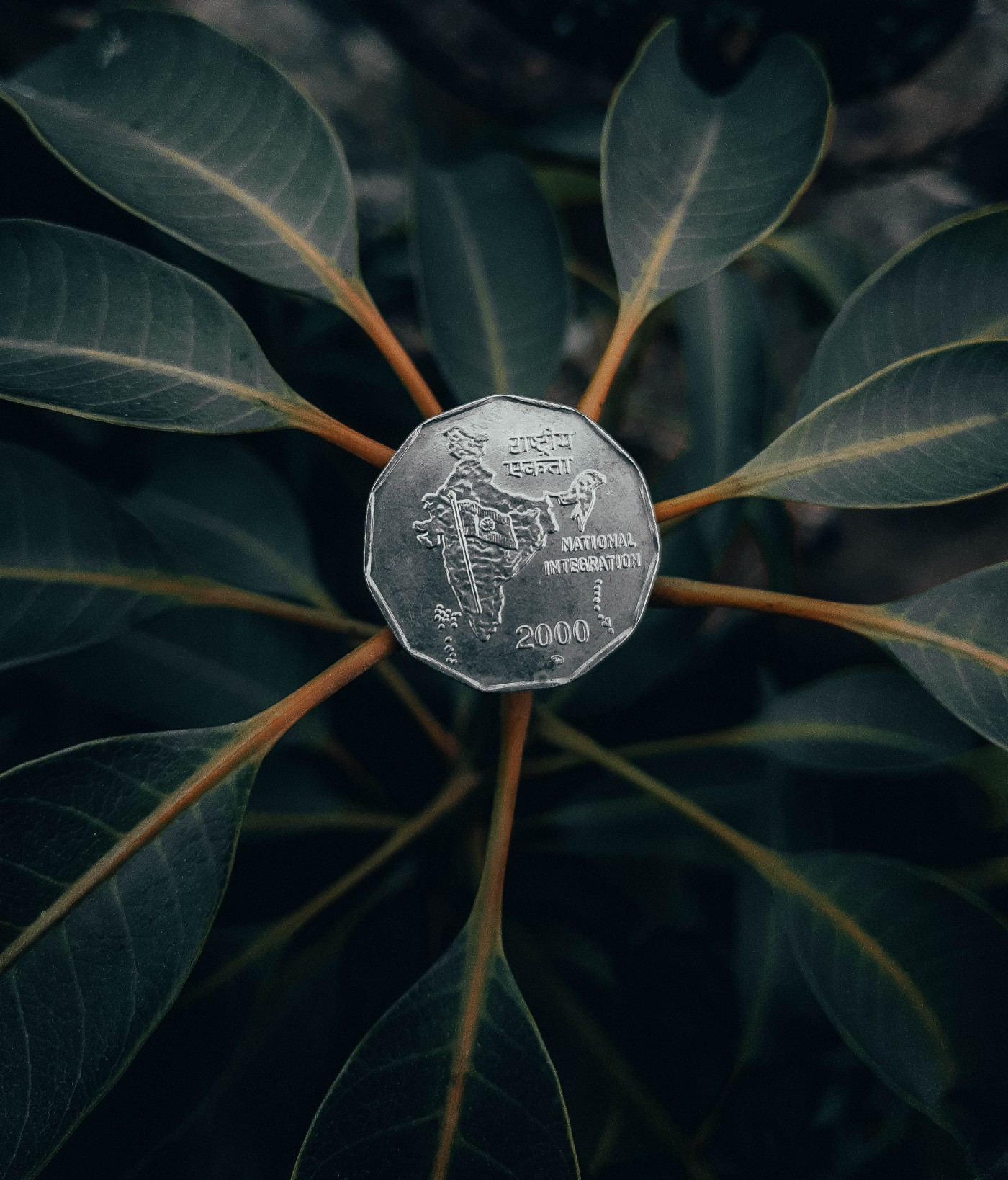 A coin with real plant leaves seemingly growing from it