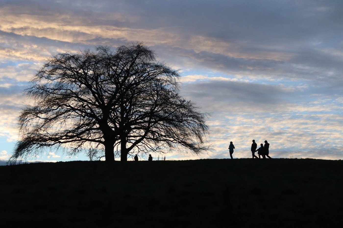 Photo at near sunset. Tree siloutetted. People as shadows standing near.