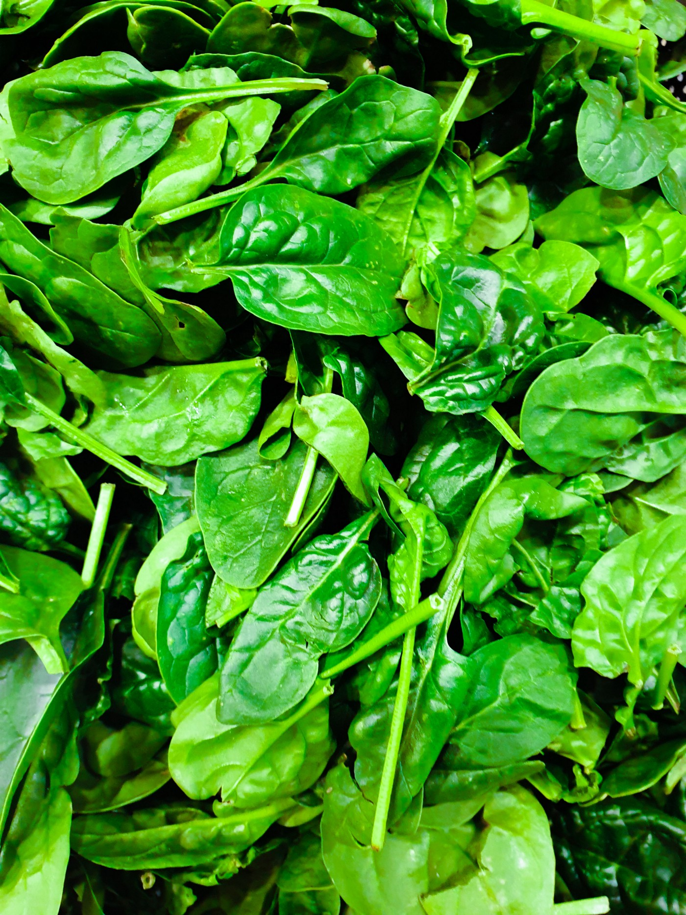 a close up on spinach leaves
