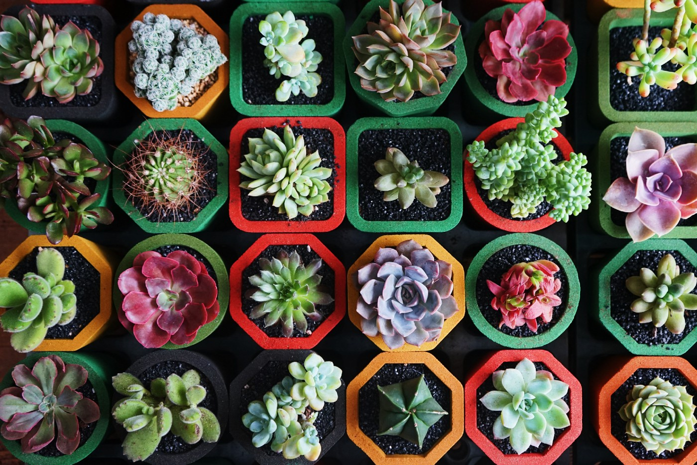 A variety of succulent plants in individual pots
