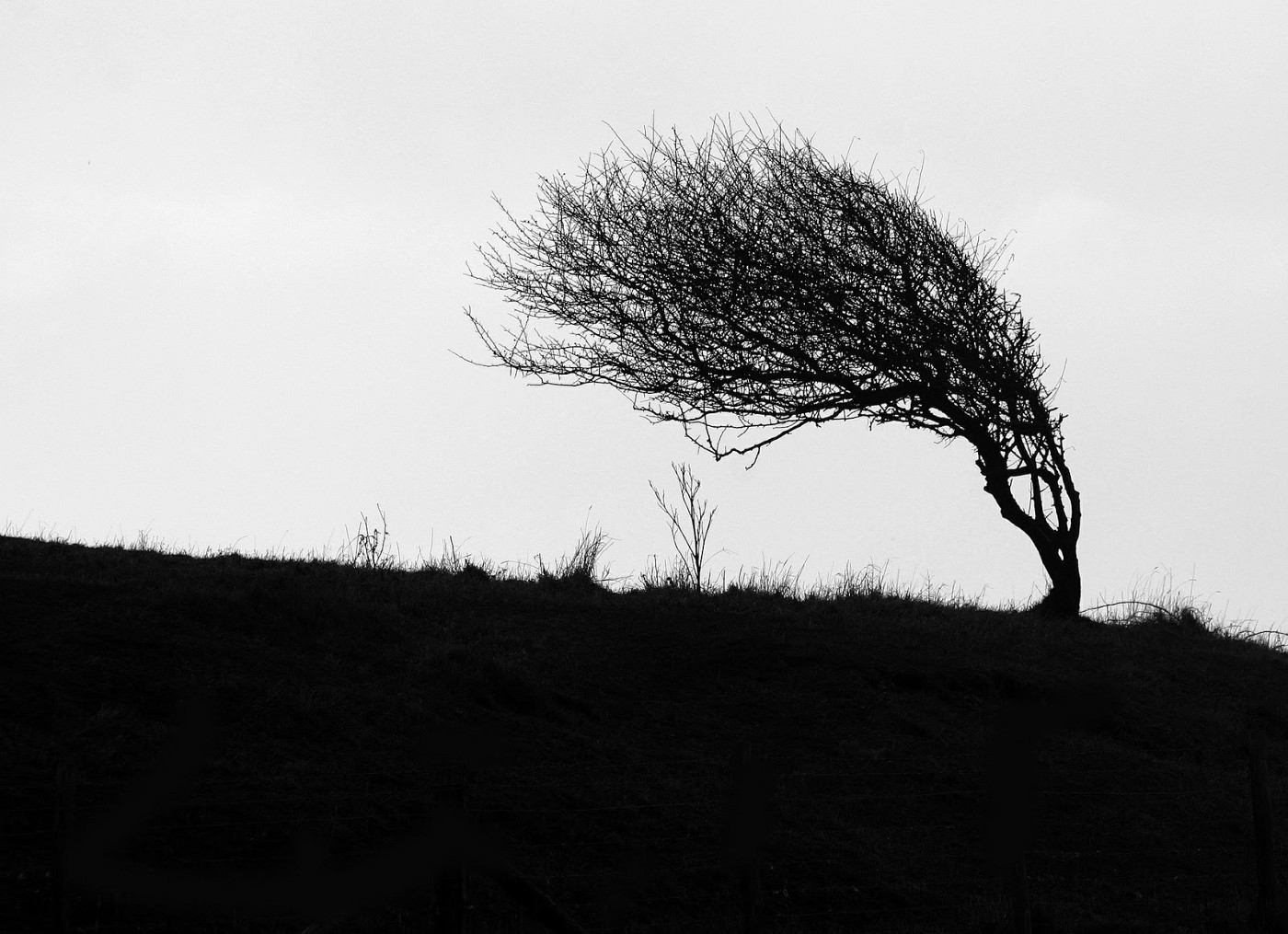 Tree bending in the wind as a symbol of resiliency.