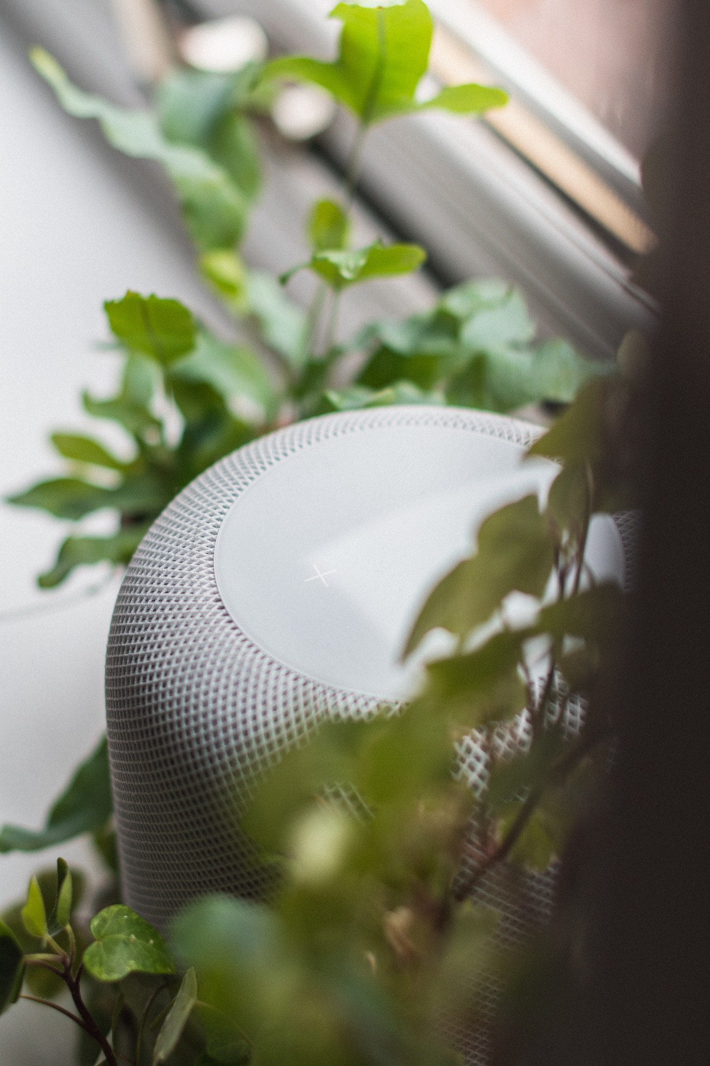 Homepod speaker surrounded by ivy