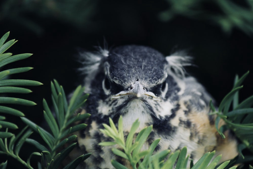 A cranky owl in a tree.