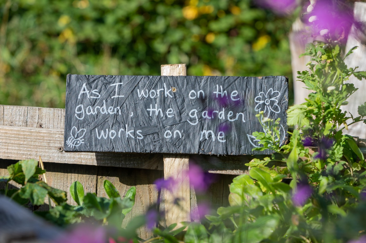 I Wasn't Expecting My Allotment To Be Good For My Mental Health—The positive power of nature and the environment