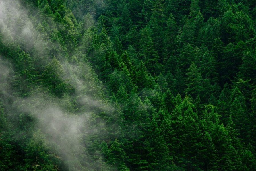 6 Ways to Remove Carbon Pollution From the Sky