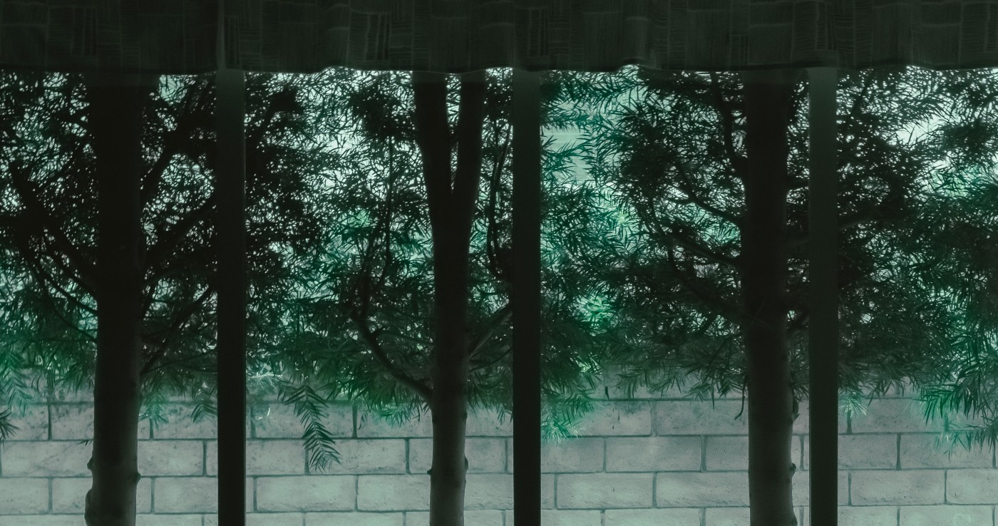 Silhouettes of tree trunks in front of a green trees hanging over a white wall.