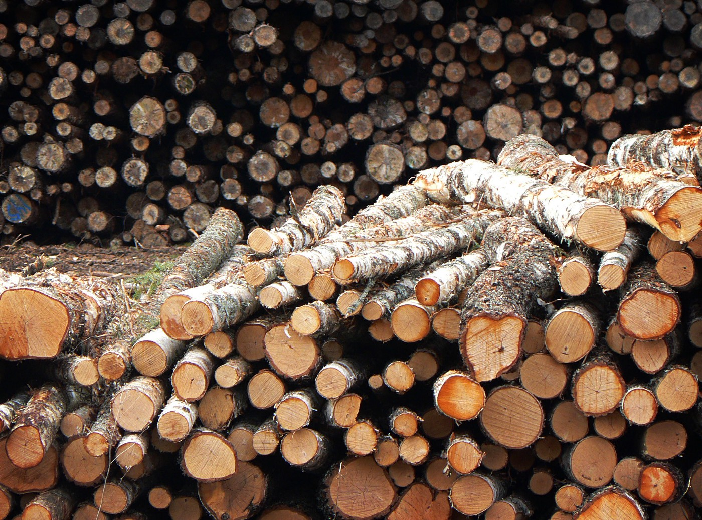 Logs that are about to rotate