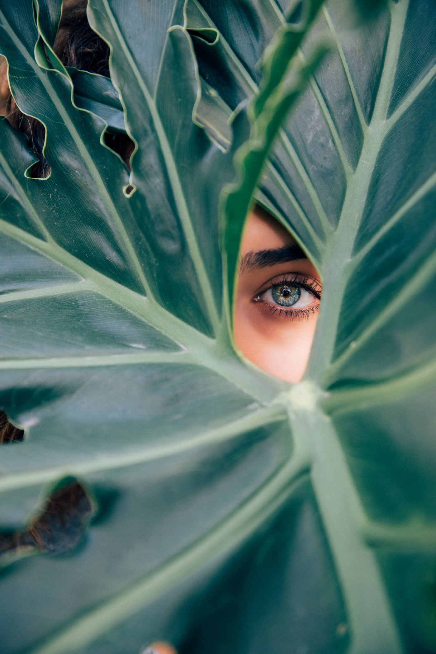 Blue-eyed, dark-haired, female's eye peeking between a gap in some large green palm leaf; she is looking up and slightly away from the camera.