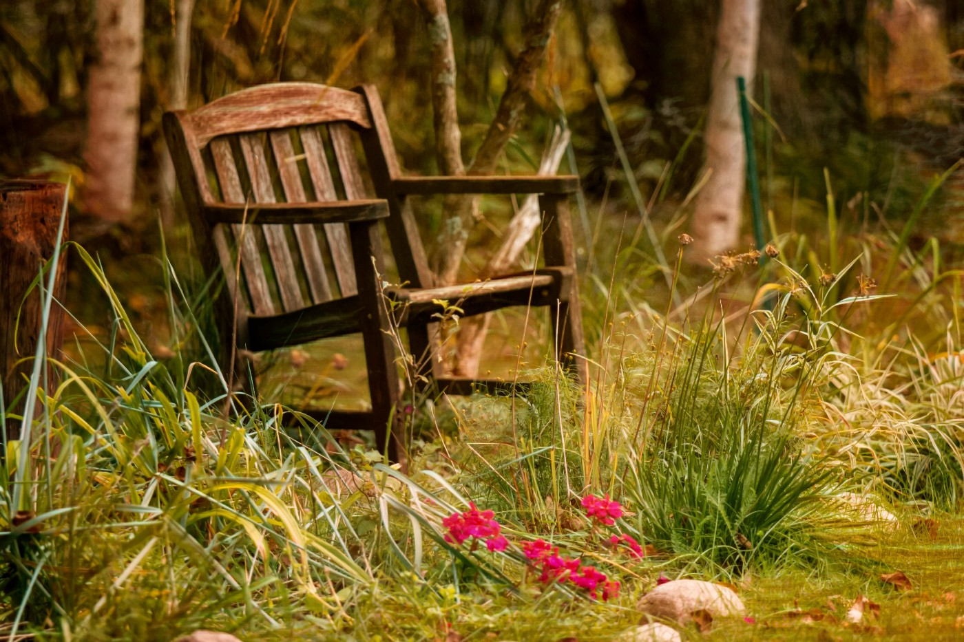 an old rocking chair in an unkempt garden. In the front is some beautiful pink flowers. The chair seems to be waiting for someone.