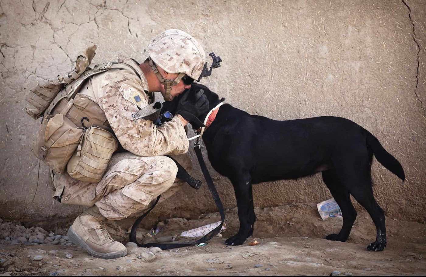 Service Dogs and Emotional Support Animals - Everything You Need To Know