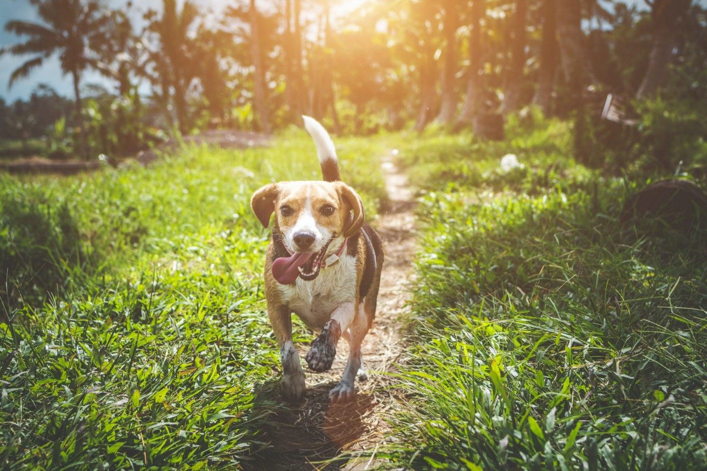 Why Dogs Wag Their Tails