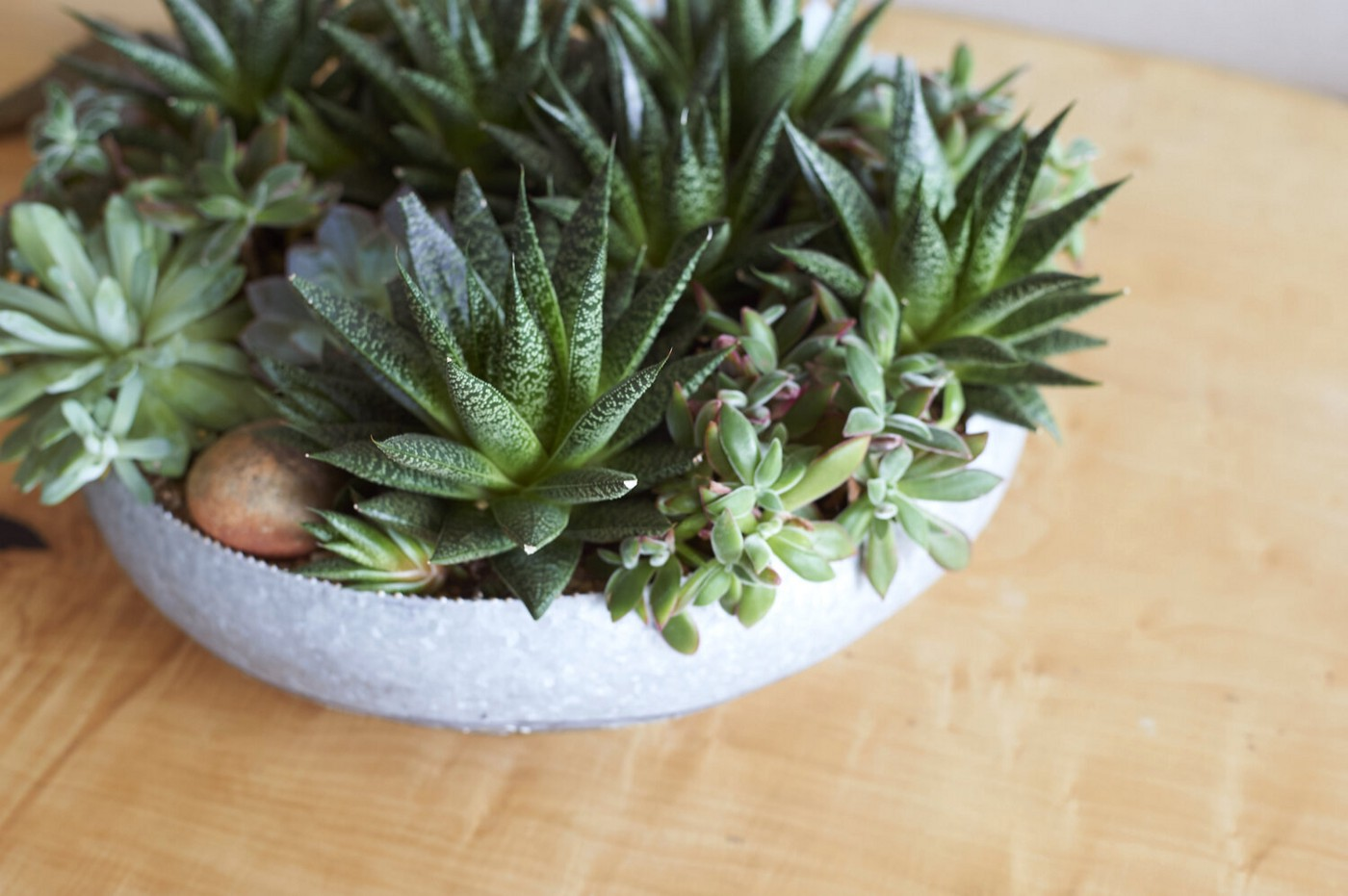 A potted succulent arrangement on top of a wooden table.