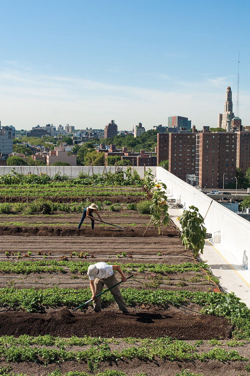 With three locations atop industrial buildings in New York City, Brooklyn Grange has created a revolutionary rooftop farming model. Photographer Valery Rizzo traveled to many of the American and French-based growing sites for the book, including this one. (Photo: Valery Rizzo, Urban Farmers)