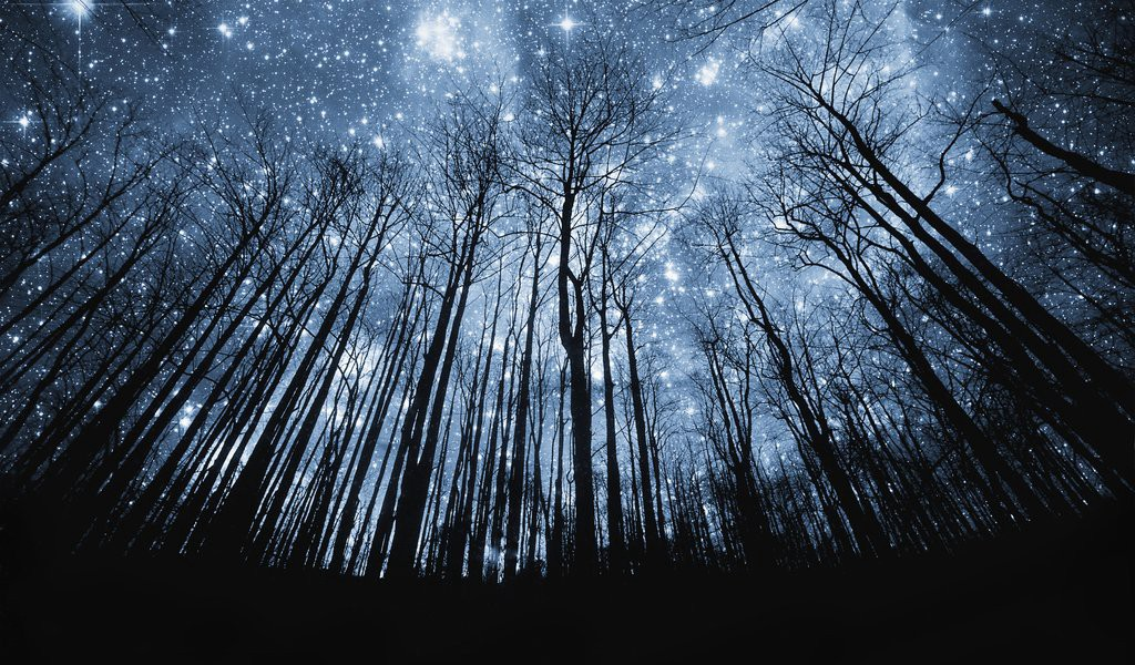 Bright, starry night sky, looking up through a clearing in dense trees.