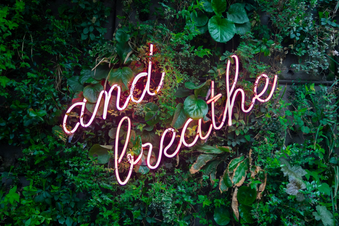 "Pink neon lights in the shape of ""and breathe"" in cursive, mounted on a wall of greenery."