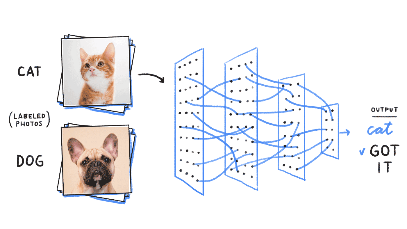 Cat vs. dog image classification - The Nuts and Bolts of Deep Learning Algorithms for Object Detection