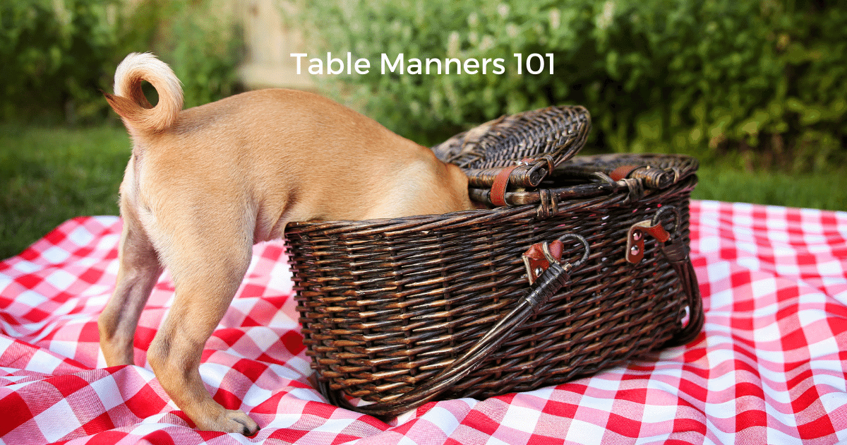 How To Teach Your Dog Manners Around Mealtimes