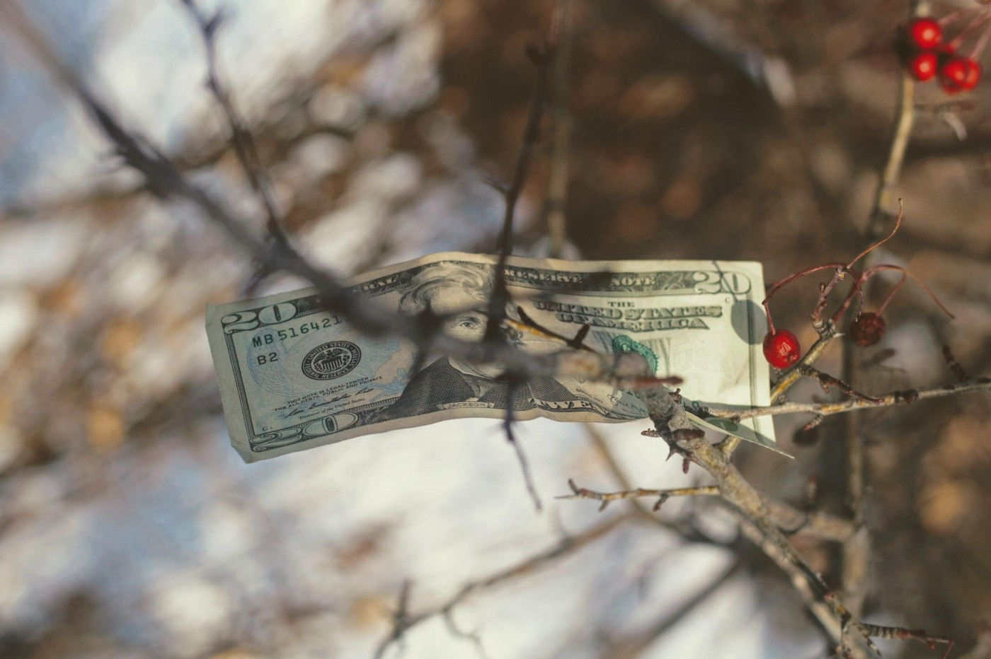 Twenty dollar bill in tree