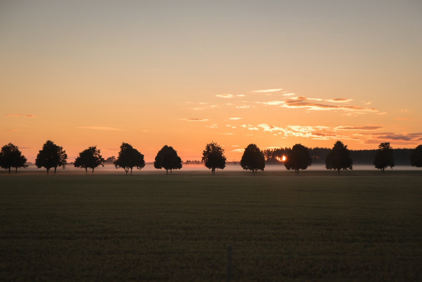 Row of trees with sunrise in background