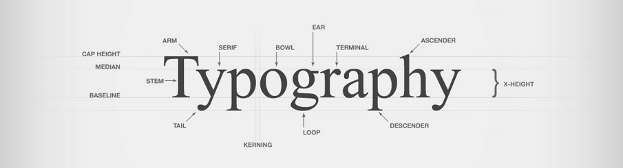 Graphic of the word typography with different elements identified like the arm, tail, bowl and earl of letters.